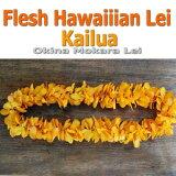 ハワイアンレイ生花。イエロー色の蘭 モカラのフレッシュレイ。贈り物にもおすすめ。ハワイアンレイ生花 Kailua