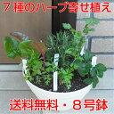キッチンハーブ7種寄せ植え我が家のミニ・ハーブガーデン必要な時にちょこっと、つまんで!8号鉢に7種の