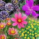 ☆季節の花苗おまかせセット 3品種各1ポット RCP【05P01Oct16】