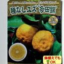 2017年新苗・果樹苗常緑低木 柑橘系 種なしゆず 多田錦   4.5号(直径13・5cm)ポット