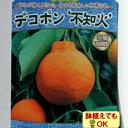 2016年新苗・果樹苗常緑低木 柑橘系 デコポン 不知火 4.5号(直径13.5cm)ポット【05P05Nov16】