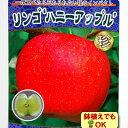 ☆2016年新苗・果樹苗 リンゴ ( りんご ) 密入りアップル(ハニーアップル)  6号(直径18cm)ポット