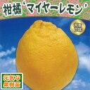 2017年新苗・果樹苗柑橘 マイヤーレモン4.5号(直径13.5cm)ポット
