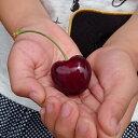 果樹苗 ハートの実ができるさくらんぼ(サクランボ)サミット4.5号(13.5cm)ポット