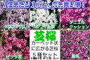 ☆1ポットあたり100円宿根草 芝桜 ( シバザクラ )  5色各2個(計10個)セット