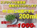 ミニパック送料無料・業務用小分けブロッコリー(スプラウト)のタネ200MLスルフォラファン高含有の今、話題の種花粉症対策にも!これだけあれば約40回以上収穫できます DM便なら全国送料無料!