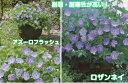 ☆ブルームスコレクション耐寒性宿根草ハーディ ゲラニューム1株 10.5cmサイズポット苗