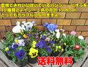 ☆寄せ植えで手軽にすぐに楽しめます花付&花色バラエティー合計13ポットで!*送料無料・他品同梱可能・お届け先地域によっては別途送料が発生する場合があります
