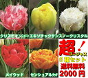 秋植え球根超ゴージュスな八重咲きフリンジチューリップ5種各1球2000円ポッキリ送料無料・他品同梱OK*お届け地域によっては別途送料がかかる場合があります