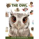 ショッピング卓上カレンダー 2020年版 THE OWL 卓上カレンダー