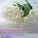 お供え 花『白いチューリップ20本の花束 予約』生花┃お悔やみ 花 喪中のはがきをもらった時 お供え 花 喪中 命日 墓前 供養 花