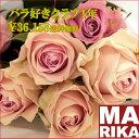 Rose-12-01