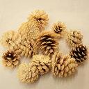 [花材・ナチュラル]松かさ さらし5個 松ボックリ クリスマスリース 手作り クリスマスリース おしゃれ 材料と キット