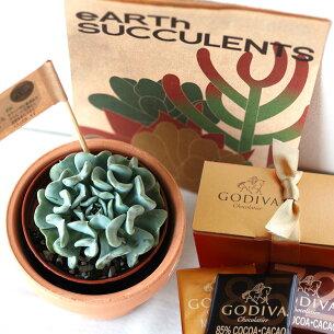 バレンタイン サキュレント ゴディバ 多肉植物 チョコレート
