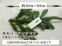 [花材]『オレゴンモミの枝 2本(ブランチ)約35センチ・生』┃予約 クリスマスリース リース手作り クリスマスリース おしゃれ クリスマスリー キット