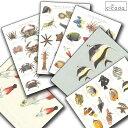 cicada はがき 海の生き物シリーズ ハタタテハゼ ツノダシ ポストカード【コンビニ受取対応商品】【RCP】02P03Dec16