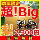 『超!Big』梨【送料無料】5〜6玉(約4.5kg)産地「茨城」より発送!