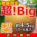 『超!Big』梨【送料無料】5~6玉(約4.5kg)産地「茨城」より発送![御歳暮][お歳暮][御年賀][お誕生日][プレゼント][贈答][贈り物]