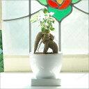【装飾選べる】多幸の樹★幸せを呼ぶガジュマルガジュマル 【SW】 ♪ ♪可愛くてお値打ち!