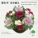 葉牡丹寄せ植え【O_220】【37】  10P03Dec16