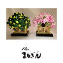 【桜橘】25号 円山 【高さおよそ12cm】雛道具 雛道具単品 桜橘 おひなさま道具 おひなさまのお花