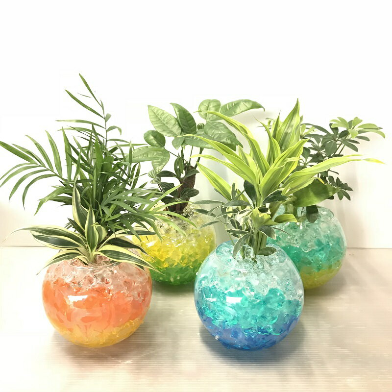 選べるミニ観葉植物MIXバブルゼリーL1鉢ハイドロカルチャー(水耕栽培)夏/インテリアグリーン/トロ