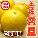 【送料無料】土佐 文旦サイズ M 10kg 【高知産】【ご家庭用】【ぶんたん】