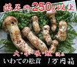 旬の国産松茸いわて産250g 大小ひらき混み(2-7本)10,000円 大きさ指定出来ません大、小、細、太、さまざま、開き、等混み。【同梱不可】