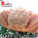 毛ガニ あす楽【北海道産 冷蔵 活毛がに(650g×1尾) ...
