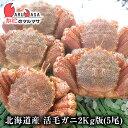 毛ガニ あす楽【北海道産 冷蔵 活毛がに 2kg詰め 5尾セ...