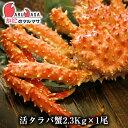 活タラバガニ 2.3kg【北海道直送 活たらばがに 楽天ラン...