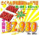 【送料無料】今年はさくらんぼ豊作だからできるこの価格!M玉が入っているので完全自宅用!(t