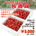 さくらんぼ佐藤錦1kg(500g×2)バラ詰