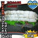 ブラックタイガーえび のばしえび 8-12サイズ 2パック20本【伸ばし海老】 532P17Sep16