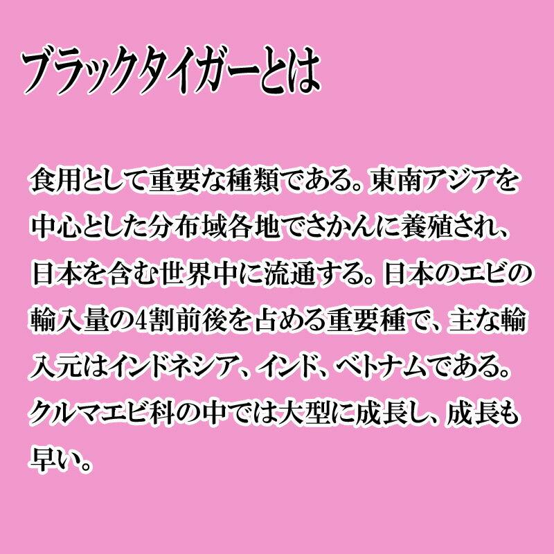 ブラックタイガーエビ 8/12サイズの紹介画像3