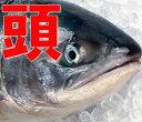 ★時鮭か紅鮭のいずれかとなります(選べません)!鮭の頭だけ10個入り(有塩) 【さけ 紅鮭 シャケ頭