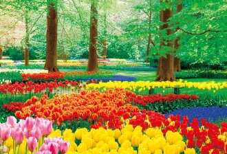 ★The miscellaneous goods which are interesting flower キューケンホフ Park in full glory, 1000P jigsaw puzzle, photograph, photo, scenery, tulip, foreign countries Netherlands interior