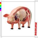 立体パズル豚解剖モデル:アオシマ4D-A-1