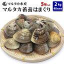 【送料無料】蓄養はまぐり 5年もの5cm〜6cmサイズ蛤(ハ...