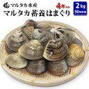 【送料無料】蓄養はまぐり 4年もの5cm〜6cmサイズ蛤(ハ...