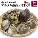 【送料無料】蓄養大はまぐり 8年もの6cm〜8cmサイズ蛤(...