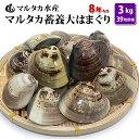 【送料無料】 蓄養大はまぐり 8年もの6cm〜8cmサイズ蛤...