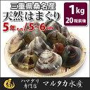 【送料無料】三重県桑名産 天然はまぐり 5年もの蛤(ハマグリ)約5cm〜6cm1kg(20粒前後)入