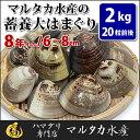 【送料無料】蓄養はまぐり 8年もの6cm〜8cmサイズ蛤(ハマグリ)2kg(20粒前後)入