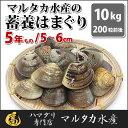 【送料無料】【業務用】大人買い蓄養はまぐり 5年もの5cm〜6cmサイズ蛤(ハマグリ)10kg(200粒前後)入