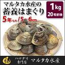 【送料無料】蓄養はまぐり 5年もの5cm〜6cmサイズ蛤(ハマグリ)1kg(20粒前後)入