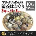 【送料無料】【業務用】大人買い蓄養はまぐり 3年もの4cm〜5cmサイズ蛤(ハマグリ)10kg(300粒前後)入