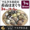 【送料無料】蓄養はまぐり 3年もの4cm〜5cmサイズ蛤(ハ...