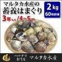 【送料無料】蓄養はまぐり 3年もの4cm〜5cmサイズ蛤(ハマグリ)2kg(60粒前後)入