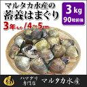 【送料無料】蓄養はまぐり 3年もの4cm〜5cmサイズ蛤(ハマグリ)3kg(90粒前後)入